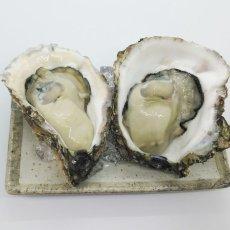 画像10: 三陸広田湾産 岩牡蠣 (10)