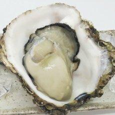 画像7: 三陸広田湾産 岩牡蠣 (7)