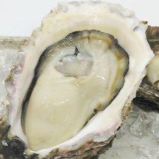 画像6: 三陸広田湾産 岩牡蠣 (6)