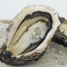画像5: 三陸広田湾産 岩牡蠣 (5)