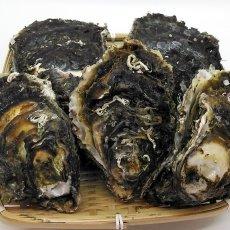 画像3: 三陸広田湾産 岩牡蠣 (3)