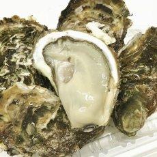 画像3: 三陸広田湾産 レンチン牡蠣 (3)