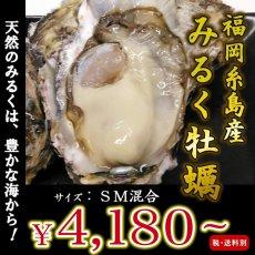 画像1: 福岡糸島産 みるく牡蠣 (1)