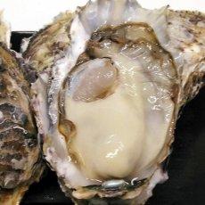 画像3: 【お急ぎ便】福岡糸島産 みるく牡蠣 (お届け地域限定) (3)