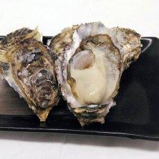 画像4: 【お急ぎ便】福岡糸島産 みるく牡蠣 (お届け地域限定) (4)
