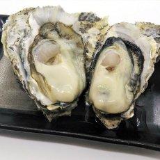 画像5: 【お急ぎ便】福岡糸島産 みるく牡蠣 (お届け地域限定) (5)