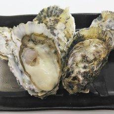画像10: 【お急ぎ便】福岡糸島産 みるく牡蠣 (お届け地域限定) (10)