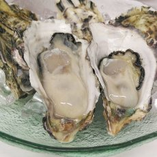 画像9: 【お急ぎ便】福岡糸島産 みるく牡蠣 (お届け地域限定) (9)
