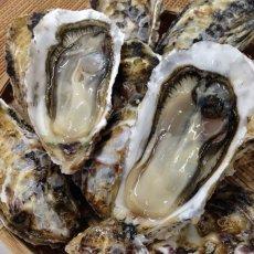 画像12: 【お急ぎ便】福岡糸島産 みるく牡蠣 (お届け地域限定) (12)