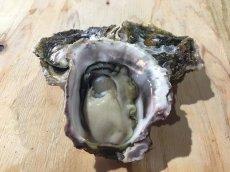 画像3: 福岡糸島産 岩牡蠣糸島サウンド (3)