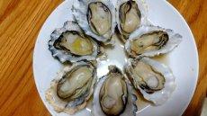 画像8: 熊本八代産 男気牡蠣 (8)