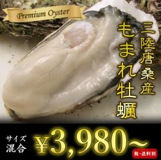画像1: 【お急ぎ便】三陸唐桑産 もまれ牡蠣 (お届け地域限定) (1)