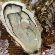 画像5: 三陸唐桑産 もまれ牡蠣 (5)