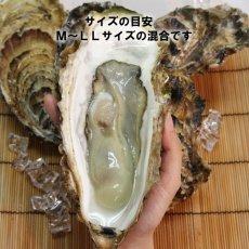 画像4: 【お急ぎ便】三陸唐桑産 もまれ牡蠣 (お届け地域限定) (4)