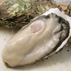 画像2: 【お急ぎ便】三陸唐桑産 もまれ牡蠣 (お届け地域限定) (2)