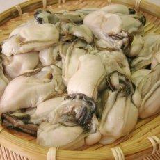 画像2: 三陸唐桑産 むき身牡蠣 (2)