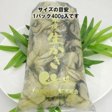 画像8: 三陸唐桑産 むき身牡蠣 (8)