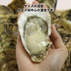 画像6: 福岡唐泊産 恵比須かき (6)
