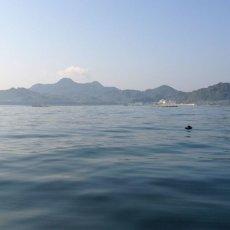 画像10: 福岡唐泊産 岩牡蠣 (10)