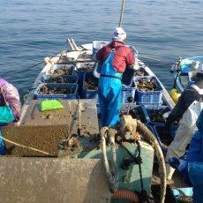 画像8: 福岡唐泊産 岩牡蠣 (8)