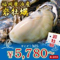 画像1: 福岡唐泊産 岩牡蠣 (1)