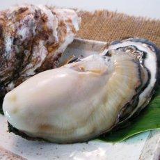 画像11: 福岡唐泊産 岩牡蠣 (11)