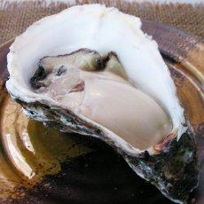画像6: 福岡唐泊産 岩牡蠣 (6)
