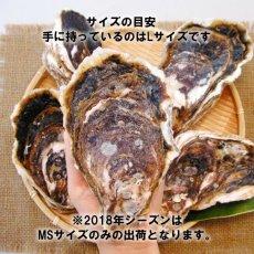 画像4: 福岡唐泊産 岩牡蠣 (4)