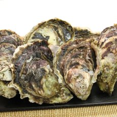 画像3: 福岡唐泊産 岩牡蠣 (3)