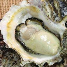 画像2: 福岡唐泊産 岩牡蠣 (2)