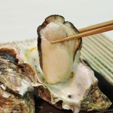 画像7: 福岡唐泊産 岩牡蠣 (7)