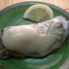 画像3: 秋田象潟産 天然岩牡蠣 (3)