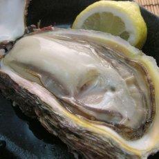 画像2: 秋田象潟産 天然岩牡蠣 (2)