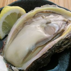 画像6: 秋田象潟産 天然岩牡蠣 (6)