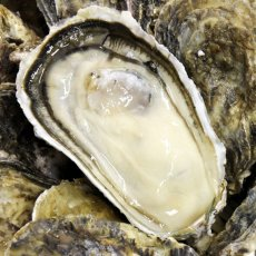 画像4: 長崎小長井産 殻付牡蠣 (4)