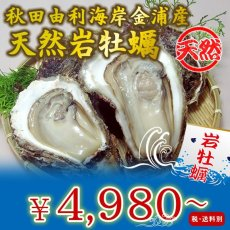 画像1: 秋田由利海岸金浦産 天然岩牡蠣 (1)