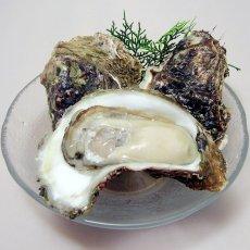 画像2: 秋田由利海岸金浦産 天然岩牡蠣 (2)