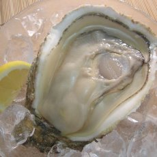 画像7: 秋田由利海岸金浦産 天然岩牡蠣 (7)
