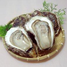 画像6: 秋田由利海岸金浦産 天然岩牡蠣 (6)