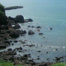 画像8: 秋田由利海岸金浦産 天然岩牡蠣 (8)
