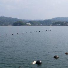 画像8: 大分国東産 殻付牡蠣 (8)