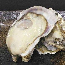 画像4: 大分国東産 殻付牡蠣 (4)