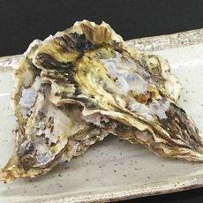 画像3: 大分国東産 殻付牡蠣 (3)