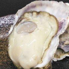 画像6: 大分国東産 殻付牡蠣 (6)