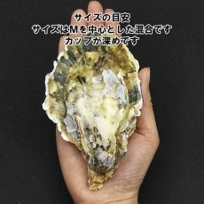 画像2: 大分国東産 殻付牡蠣 (2)