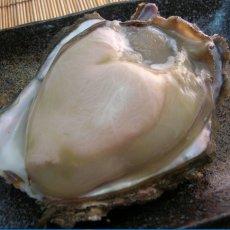 画像7: 京都舞鶴産 天然岩牡蠣 (7)