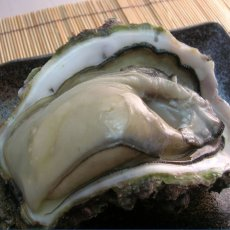 画像6: 京都舞鶴産 天然岩牡蠣 (6)
