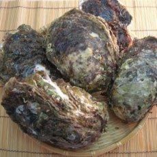 画像5: 京都舞鶴産 天然岩牡蠣 (5)