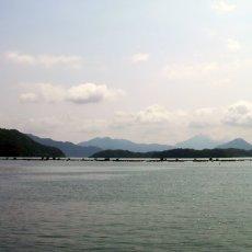画像4: 京都舞鶴産 天然岩牡蠣 (4)