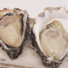 画像3: 京都舞鶴産 天然岩牡蠣 (3)